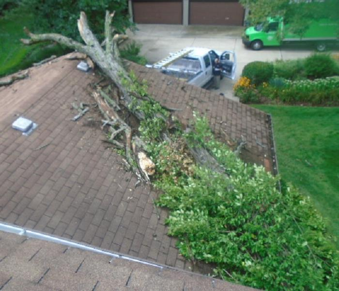 Emergency Roof Tarp Service For Fallen Trees Before