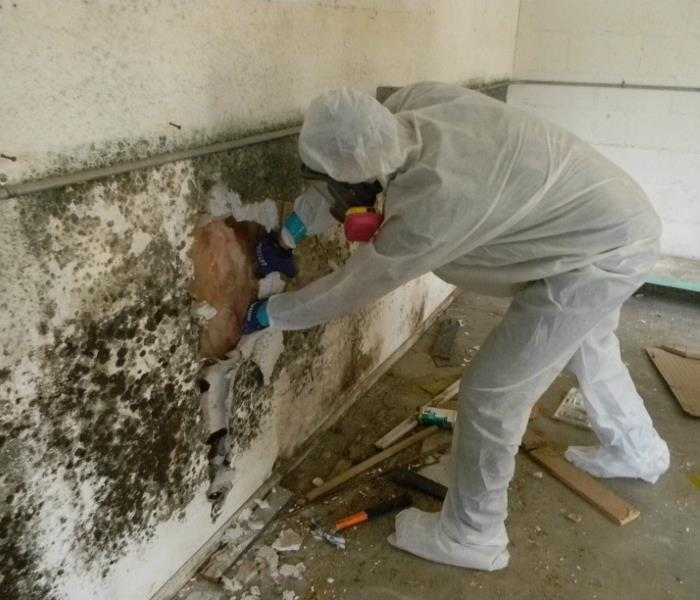Mold Cleanup in Alsip