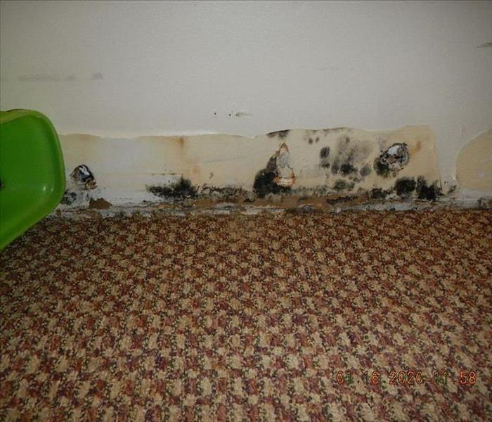 mold growth on wall