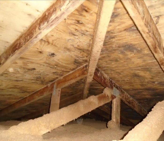 Attic Mold Removal